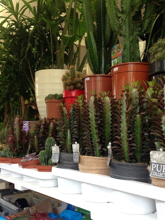 Loads of new house plants