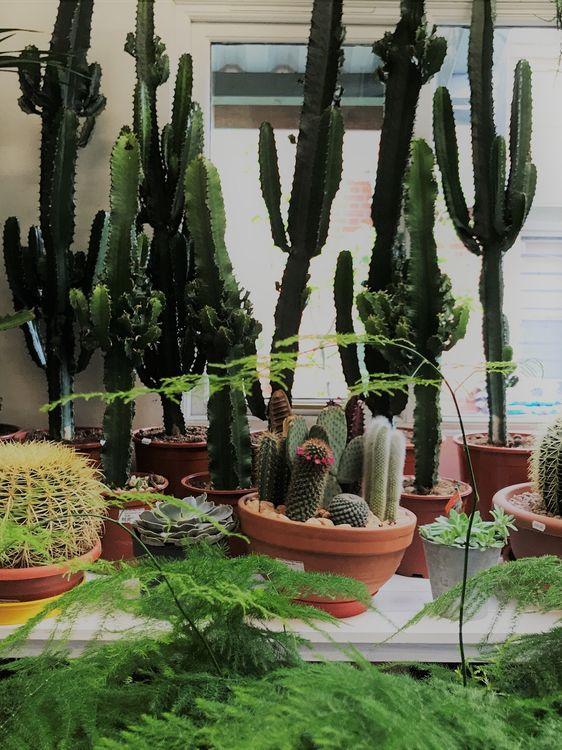 Cacti and Maidenhair