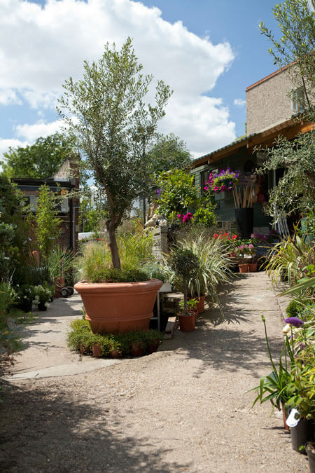 DULWICH POT AND PLANT GARDEN